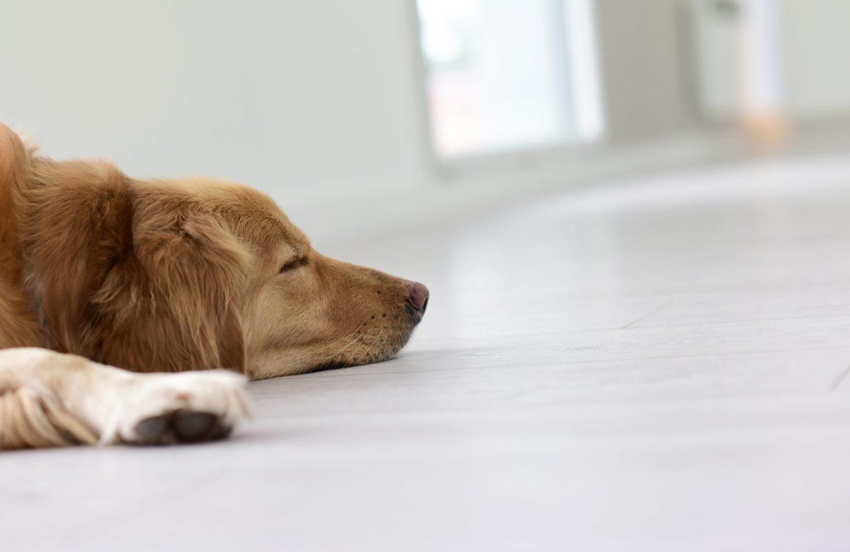 pet friendly flooring singapore