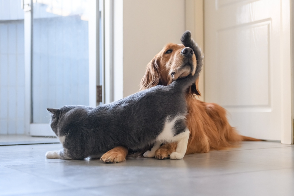 vinyl flooring pet friendly